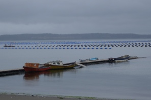 Oyster beds - seem to be everywhere off the coast