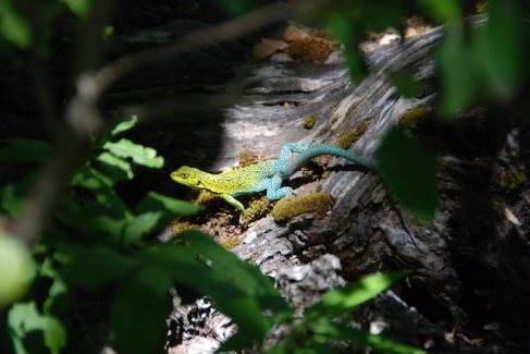 Stewart won the photography competition after spotting this beautiful lizard.