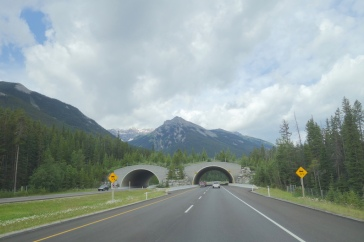 Animal bridges to prevent road kills on the busy highway are fully fenced.