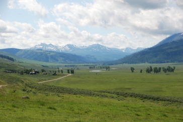 The Lamar Valley - bison heaven!