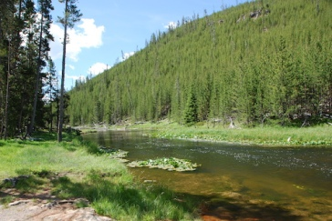 Pine trees and crystal clear rivers