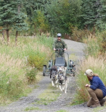 Putting the dogs through their paces