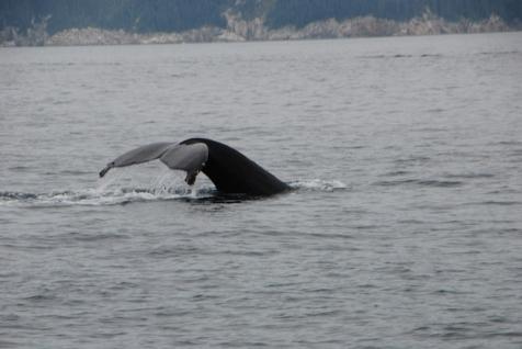 A humpback whale bids us farewell.